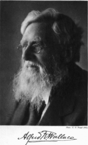 A. R. Wallace